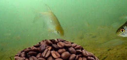 Реакция рыбы на кофе