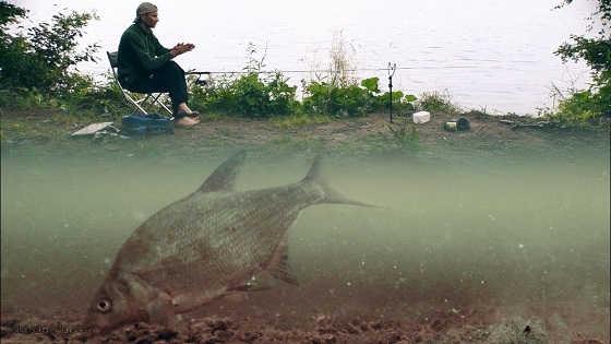 Рыбалка на фидер с подводными камерами