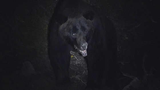 Встреча с медведем на прииске