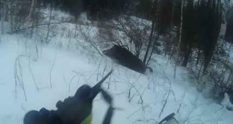 Кабан напал на охотника