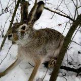 Как поймать зайца на петлю