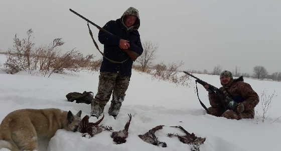 Охота на фазана в Казахстане
