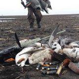 Охота на гуся в Карелии 2018