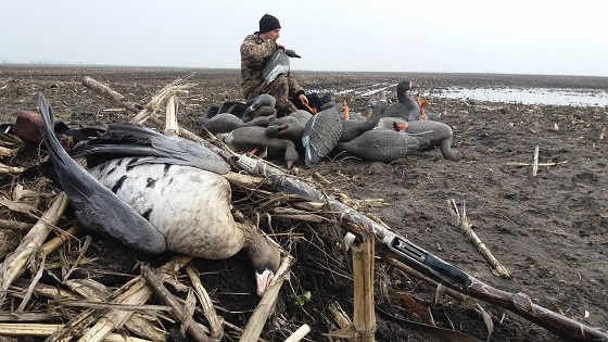 Охота на осеннего гуся в 2018