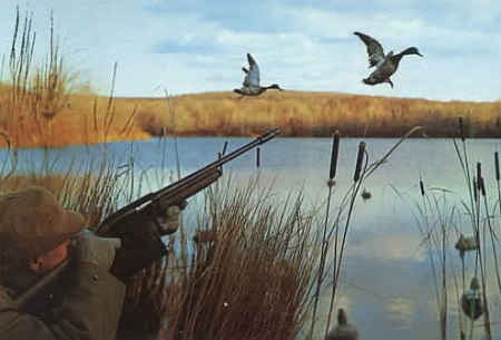 Охота на перелетную утку под конец сезона