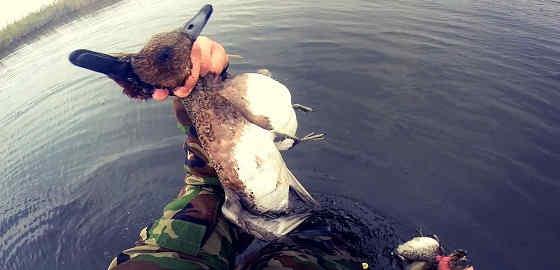 Охота на утку с МР-153
