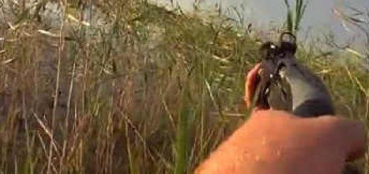 Охота на утку в Курске