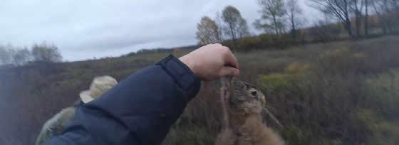 Охота на зайца в Запорожской области