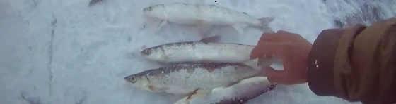 Рыбалка на ряпушку на Севере Якутии
