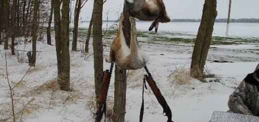 Редкий случай на охоте на зайца