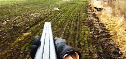 Удивление собаки когда заяц в метре