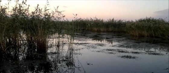 Утиная охота в Курганской области