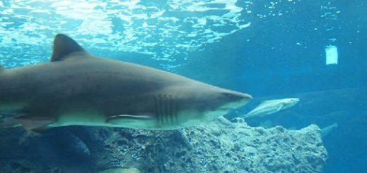 Акулы в аквариуме - проще простого