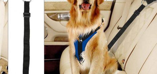 Безопасность вашей собаки