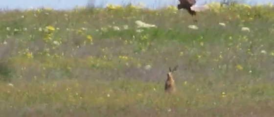 Боевой заяц