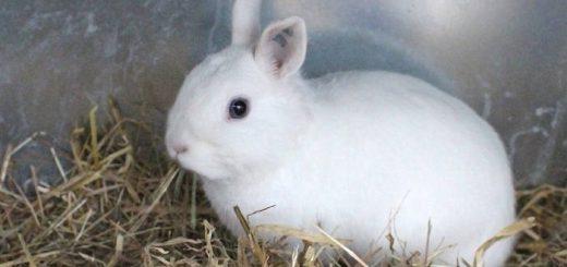 Где купить декоративного кролика?