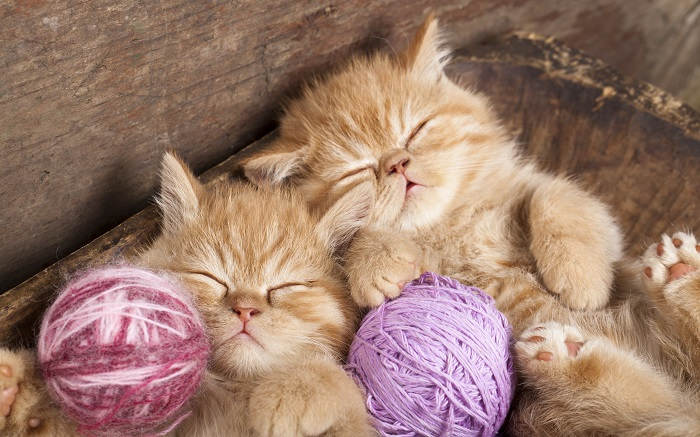 Вы решили обзавестись котятами?