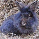 Кролик Барт