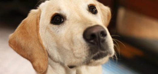 Быстрое лечение поноса у собаки
