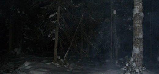 Ночная охота на таежного монстра