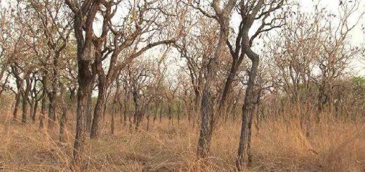 Охота в Камеруне