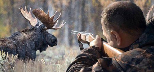 Охота на лося – экстрим и удовольствие