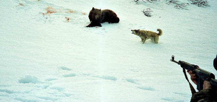 Охота на медведя в зимнее время