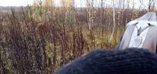 Охота на вальдшнепа на осенних высыпках
