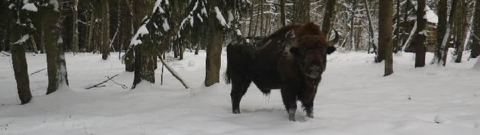 Охота в Польше
