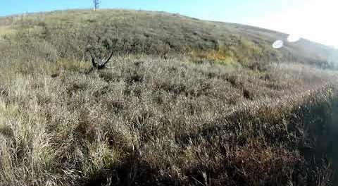 Охота на зайца 5 ноября