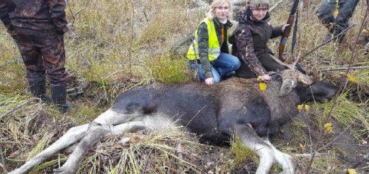 Осенняя охота на лося