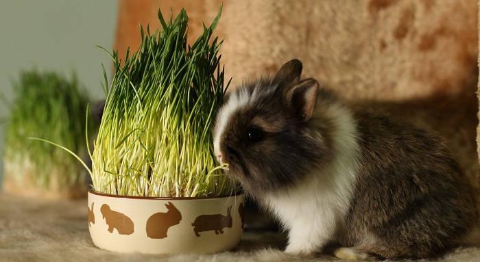 Принадлежности для декоративного кролика