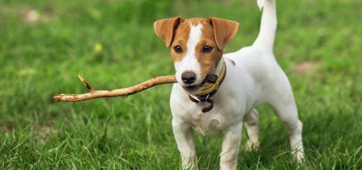 Сознание вашей собаки
