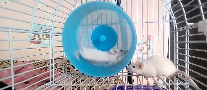 Выбираем мышонка