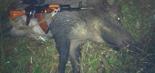 Вооружение для охоты на кабана