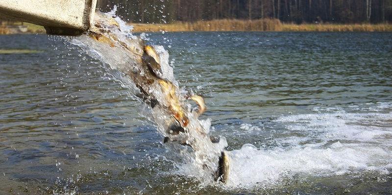 Зарыбление водоемов