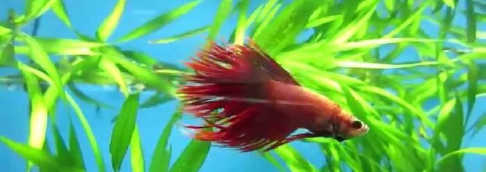Вкратце об аквариумных рыбках