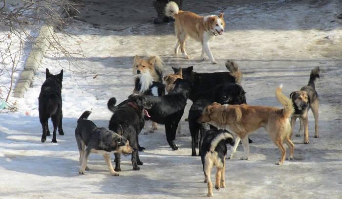 Где водятся бездомные собаки