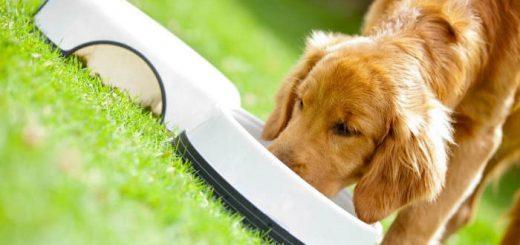 Диета для домашних животных