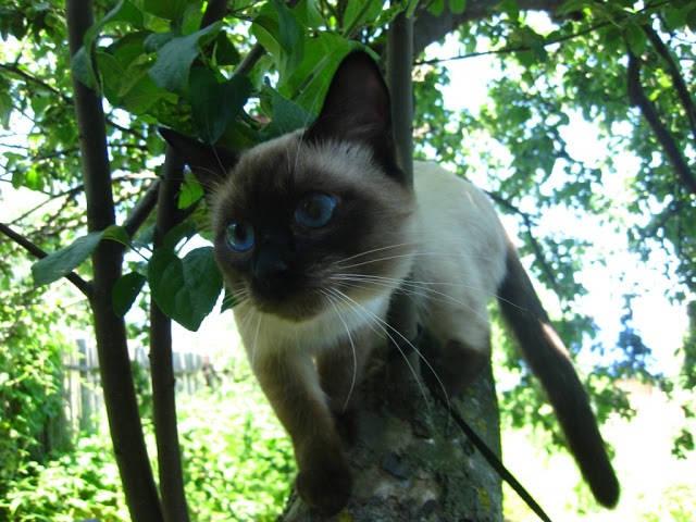 Отношение кошки к даче