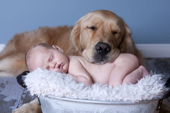Новорожденный ребёнок и животное