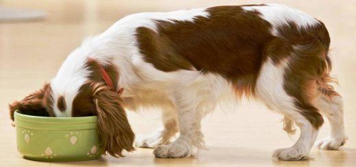 Правильный рацион питания собаки