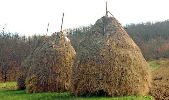 Заготовка бурого сена