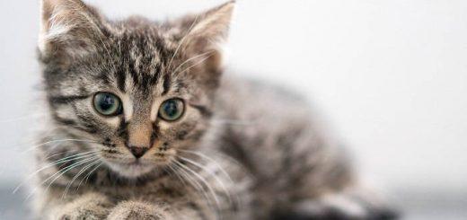 Заводим домашнее животное: зачем это надо