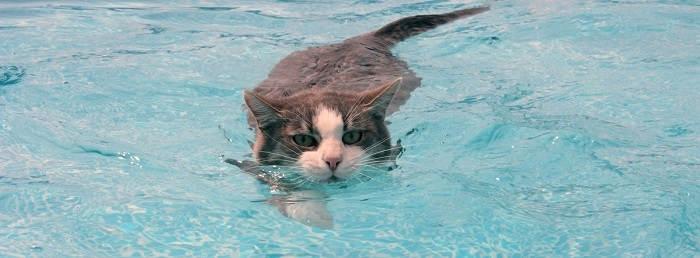 Как приучить животных к воде