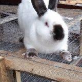 Клетка для кролика своими руками
