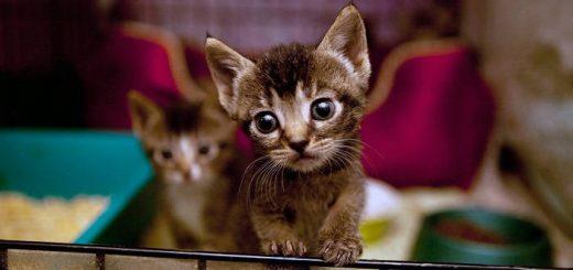 Меры безопасности при содержании котёнка