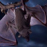 Почему летучие мыши боятся воды