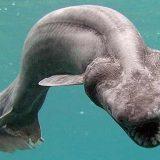 Необычный вид акул