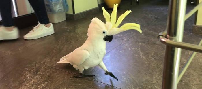 Перевозка попугая-какаду